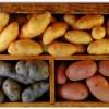 Обработка клубней картофеля перед посадкой: лучшие средства