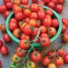 Подкормка томата во время плодоношения: лучшие средства