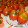 Описание сорта томата Трюфель: особенности выращивания