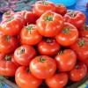 Семена томатов от коллекционеров на 2018 год: обзор