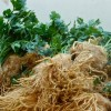 Как хранить сельдерей на зиму в домашних условиях?