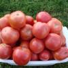 Когда можно сажать помидоры в открытый грунт: правила высадки