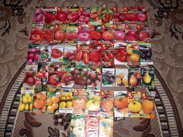 С каждым годом выводятся новые сорта помидор
