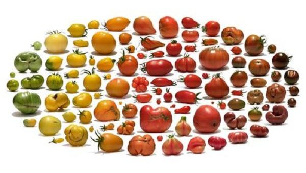 Существует множество различных сортов помидор, которые отличаются по форме и цвету