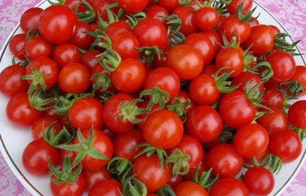 Плоды сорта Черри, одни из наиболее маленьких томатов