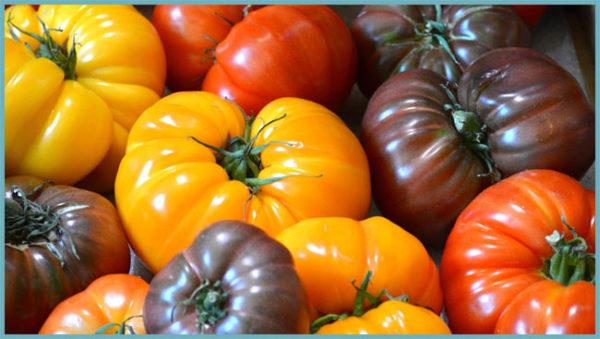 Существуют помидоры-гибриды, они пользуются популярностью среди огородников