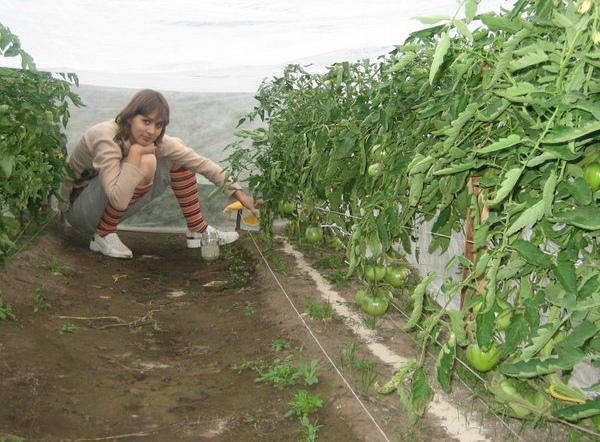 Подкормка томатов древесной золой снижает кислотность почвы