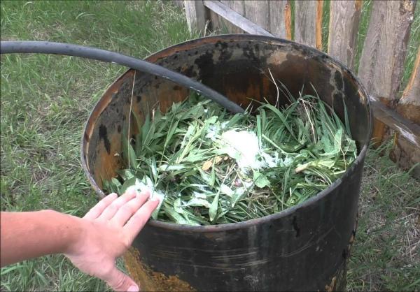 Приготовление травяного настоя для подкормки томатов