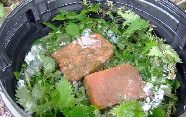 Удобрение для томатов из дрожжей и крапивы