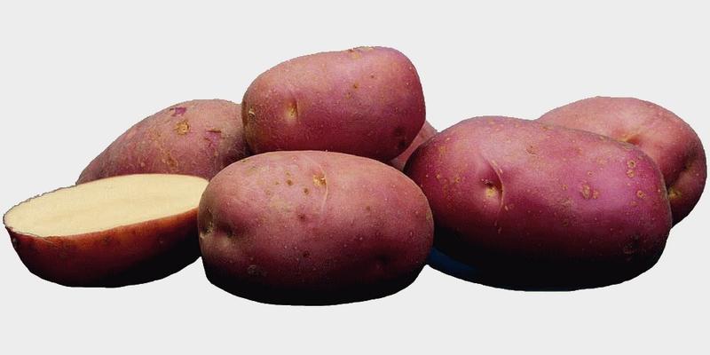 Картофель голландский сорта Ред Скарлетт