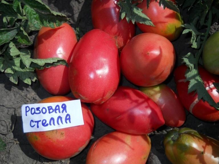 На снимке помидоры сорта Розовая Стелла