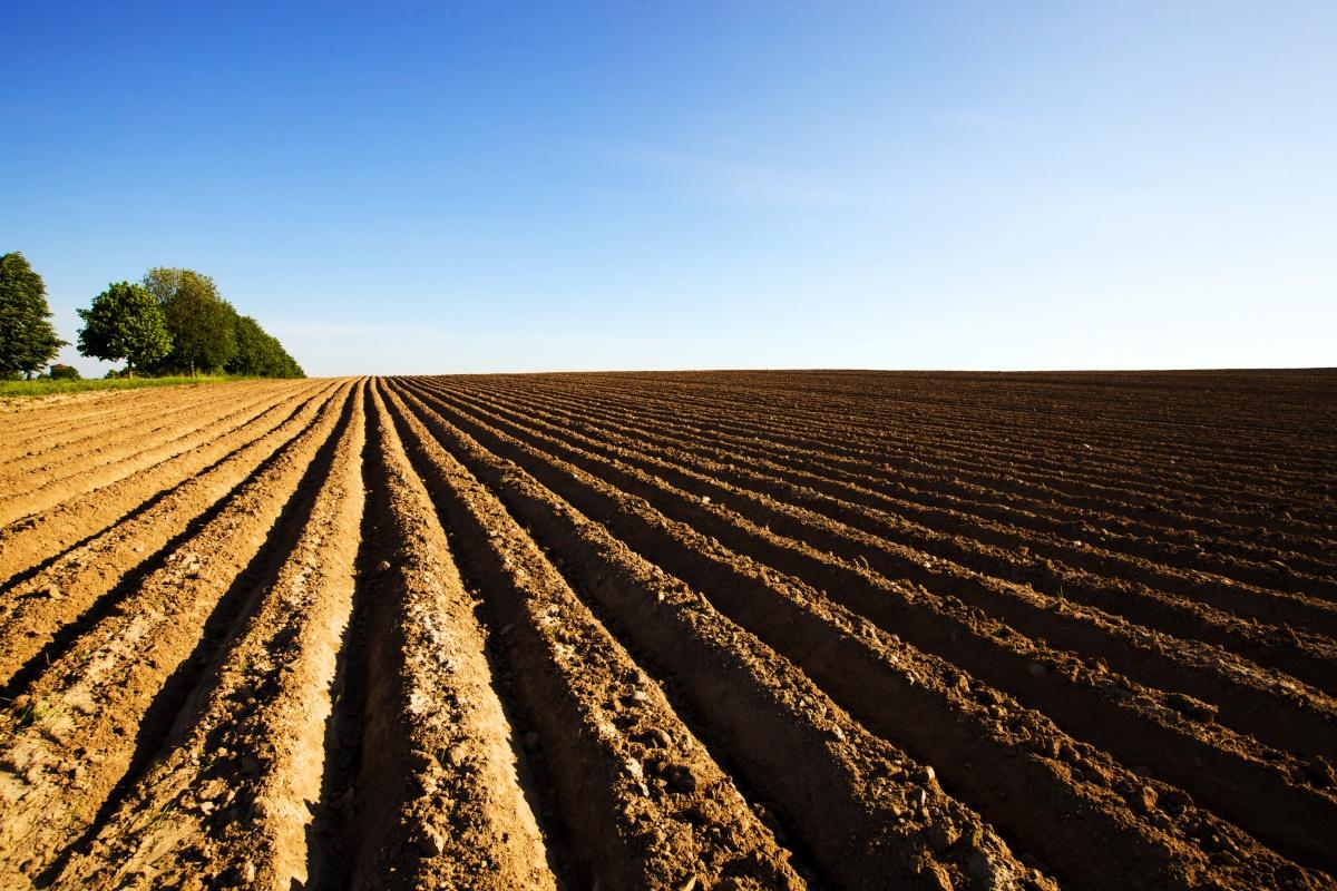 Пример гребневой посадки карофеля