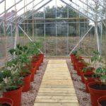 Схема посадки помидор в теплице 3 на 6.jpg