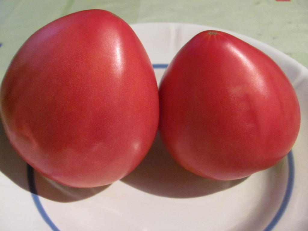 Сорт томатов Сибирский Тяжеловес