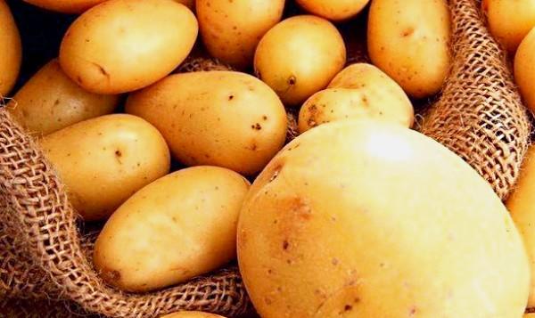 Собранный картофель в мешке