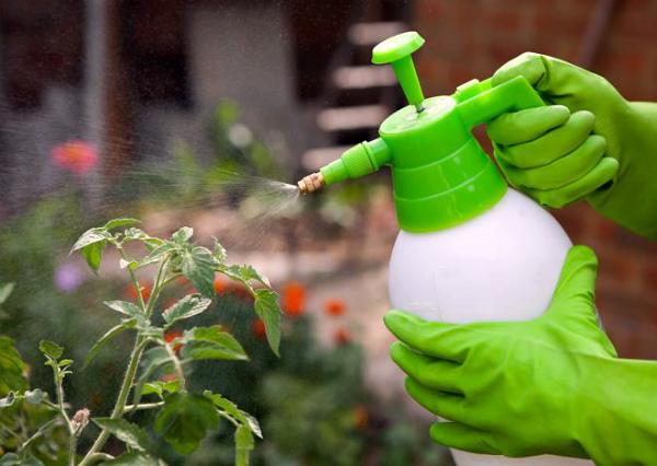 Опрыскивание перца раствором борной кислоты