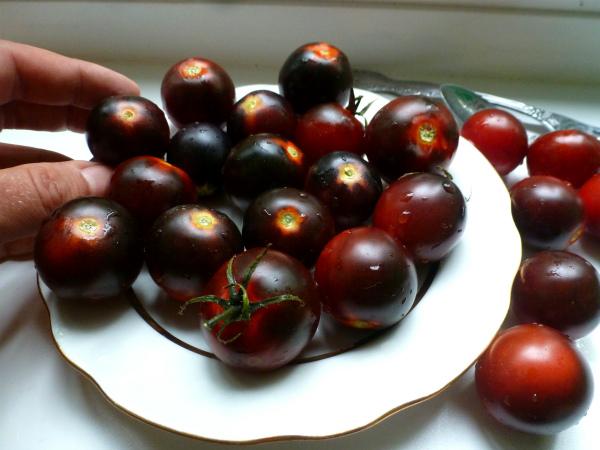 Черноплодные помидоры черри на тарелке