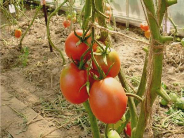 Розовые плоды томата ДеБарао