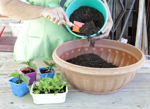 Подготовка почвы для пересадки перца в отдельную тару