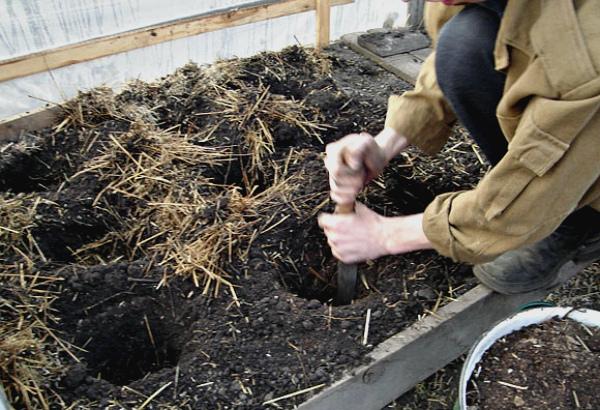 Подготовка грунта и выкапывание лунок для посадки