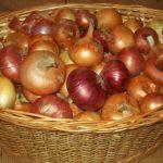 Урожай разного лука в корзине