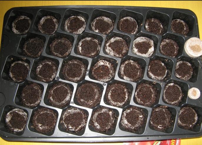 Почва для посадки семян томатов