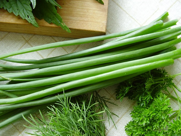 Пучок зеленого лука