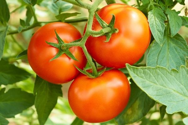 Три спелых помидора