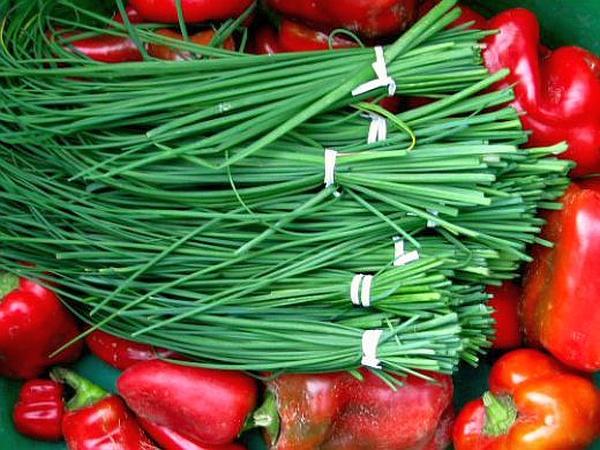 Пучки зеленого лука