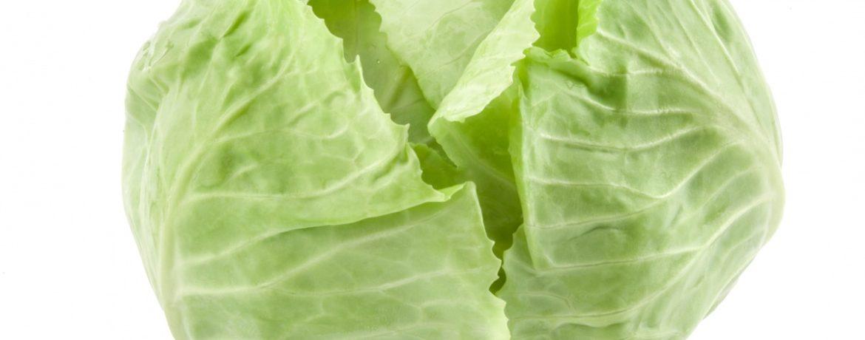Вид капусты белокочанная
