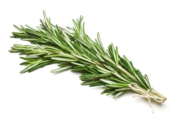 Вечнозеленое растение размарин