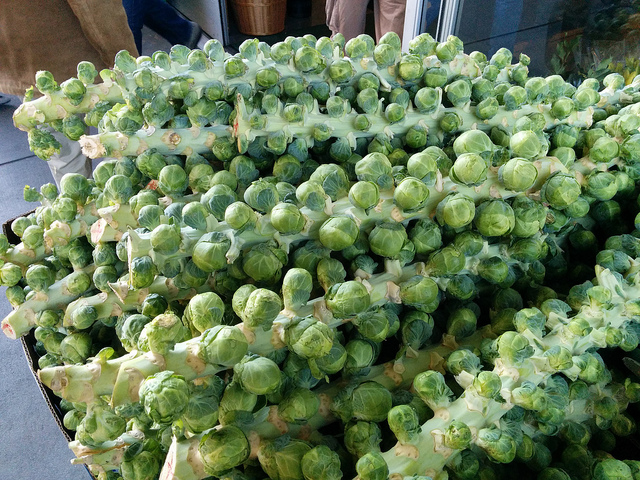 Стебель капусты брюссельской