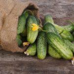 Урожай огурцов в мешке