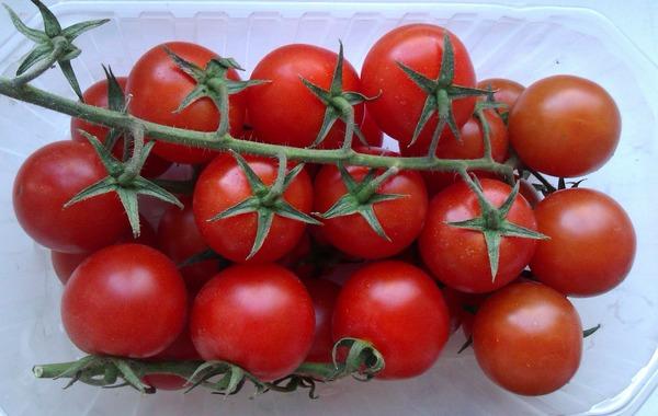 Урожай интердемиантных помидоров