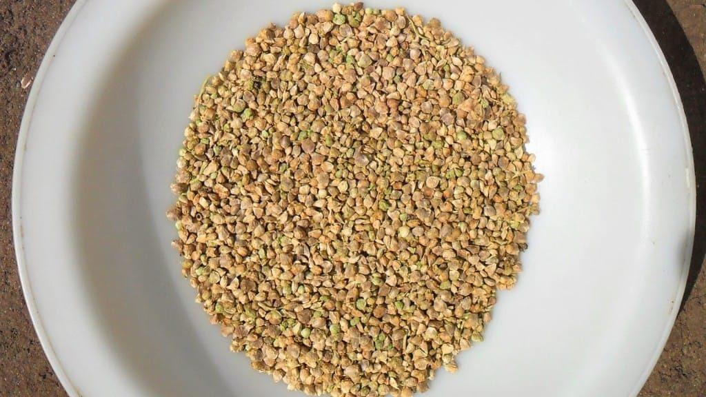 Семена шпината на тарелке
