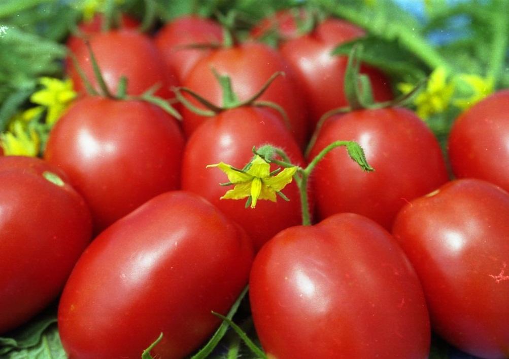 Вид помидоров де барао