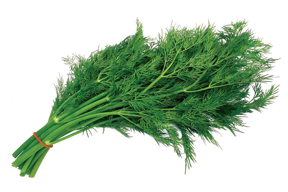 Пучок зеленого укропа