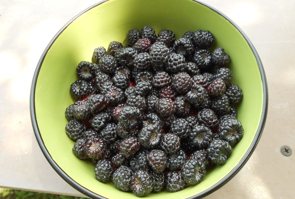 Ягоды малины на тарелке