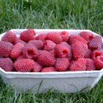 Урожай малины в коробочке