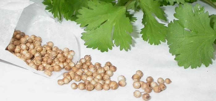 Семена петрушки для посадки
