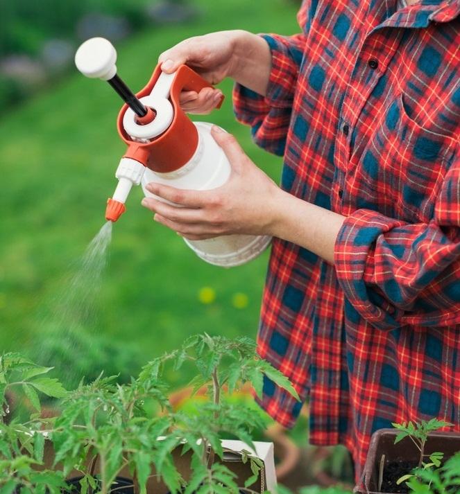Лечение томатов от кладоспориоза