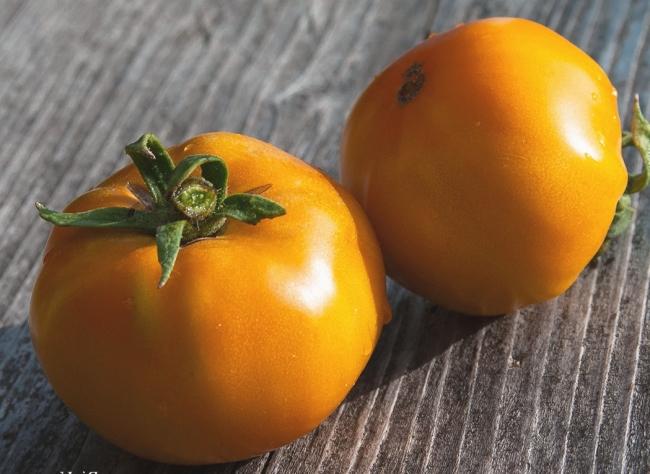 Хурма сорт томатов