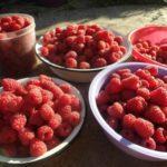 Урожай ягод на тарелках