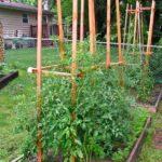 Деревянные клетки для подвязывания томатов