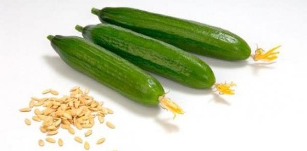 Плоды и семена огурцов
