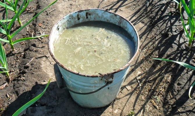 Навозная жижа для полива огурцов