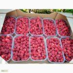 Урожай малины в коробках