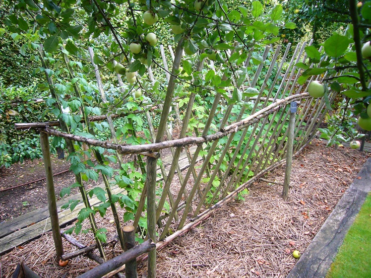 Малина, растущая в саду
