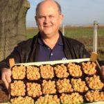 Урожай малинки в ящиках
