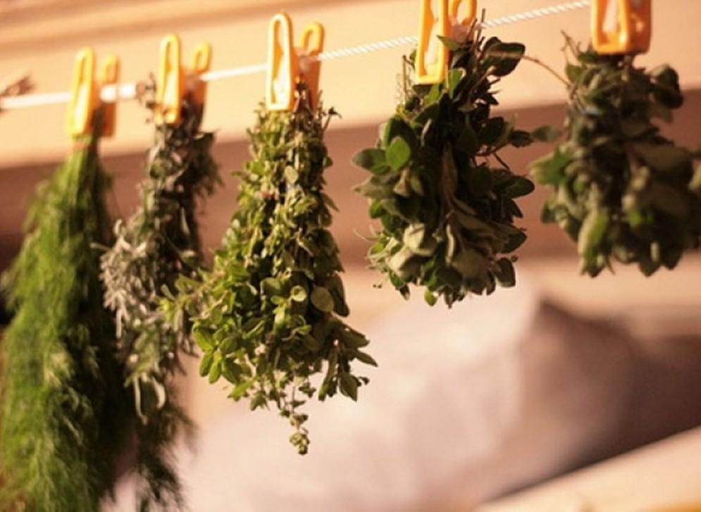 Как сушить базилик на зиму в домашних условиях